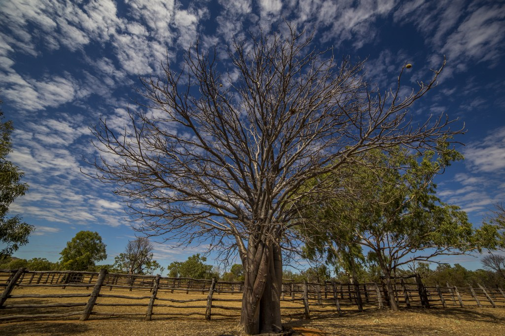 Gregory National Park_6_1024x683