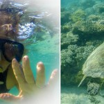 Snorkel girl and turtle