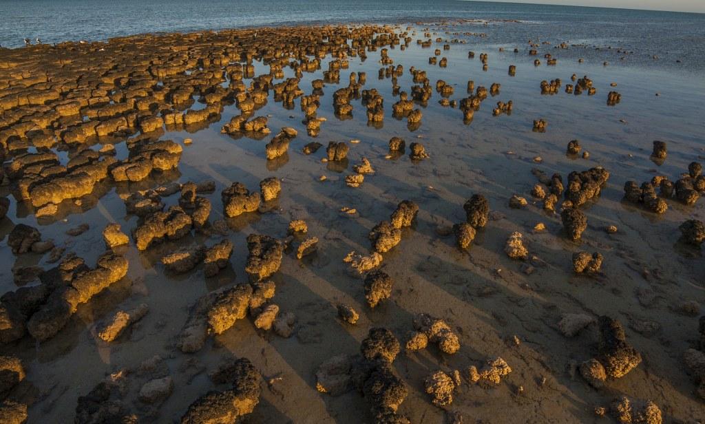Hamelin Pool Stromatolites_5_1024x616