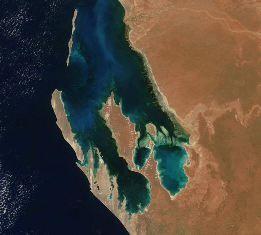 Shark Bay aerial