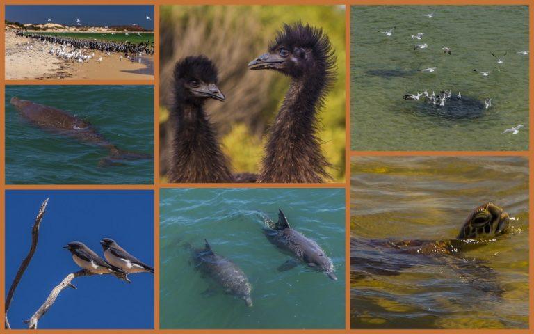 Shark Bay4_1024x640