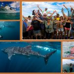 Kings Ningaloo Whale Shark Eco Tour May 03 2016_1024x768